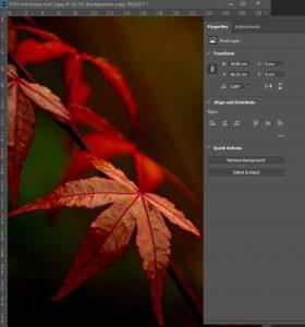 Online Photoshop Training & Onsite Photoshop Training